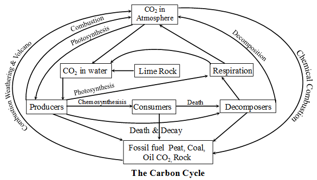 Carbon cycle biology the lime rocks also contribute to co2 in water the aquatic producer use this co2 for photosynthesis and return it by respiration ccuart Choice Image