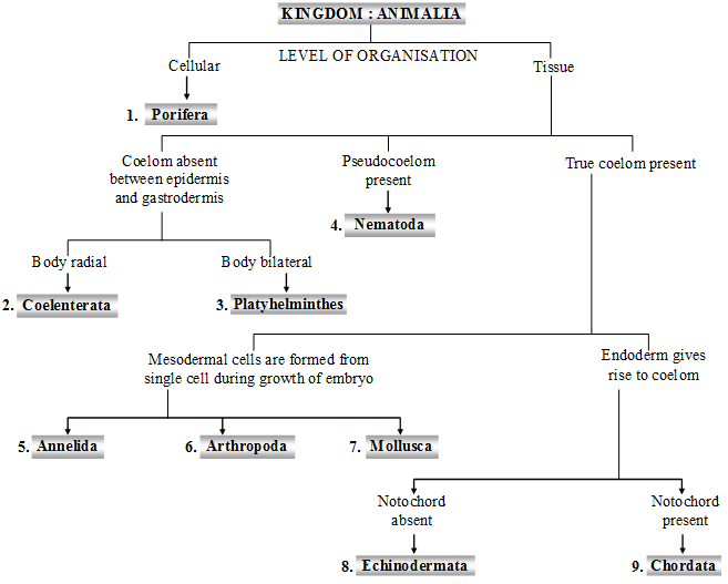 Image of: Kingdom Reproduction Is Generally Sexual And The Haploid Stage Is Represented Only By Gametes Growth Of Organisms Stops When The Adult Stage Is Reached Plus Topper Kingdom Animalia Or Animal Kingdom Biology