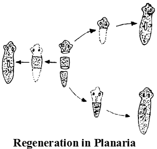Spore Formation and Regeneration Biology